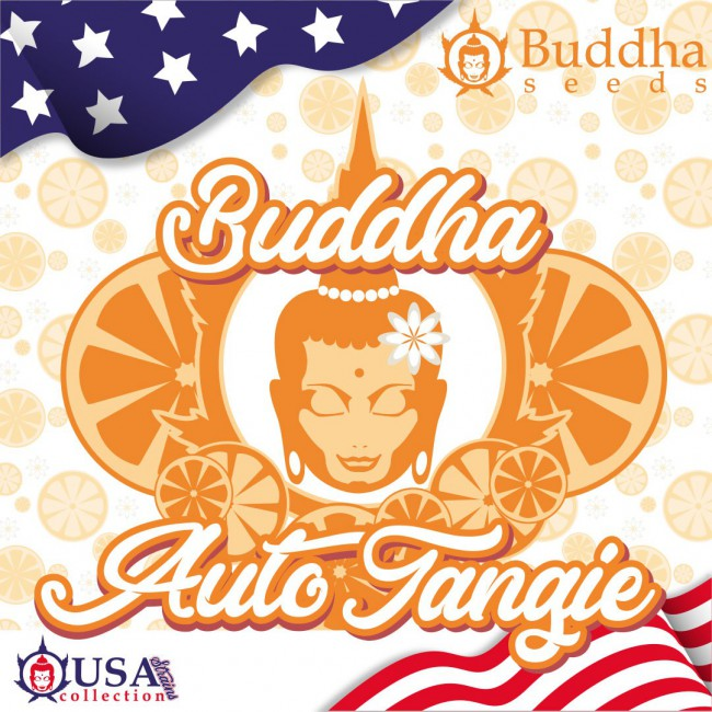 Buddha Auto Tangie