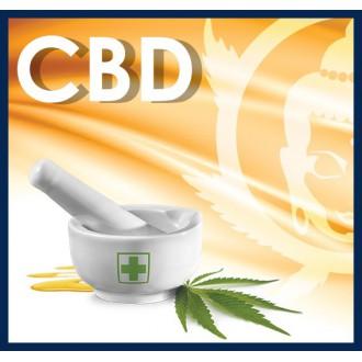 CBD • Buddha Seeds
