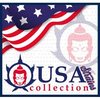 USA Collection Strains • Buddha Seeds